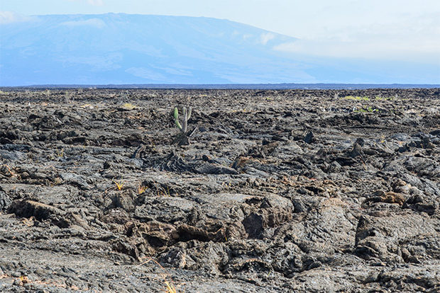 Cruises to the Galapagos Islands for 12 people October 2017