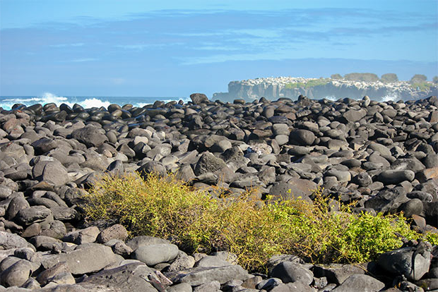 Cruises to the Galapagos Islands for 15 people October 2020