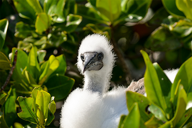 Cruises to the Galapagos Islands for 4 people December 2017