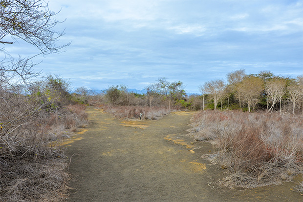 Cruises to the Galapagos Islands for 5 people December 2017