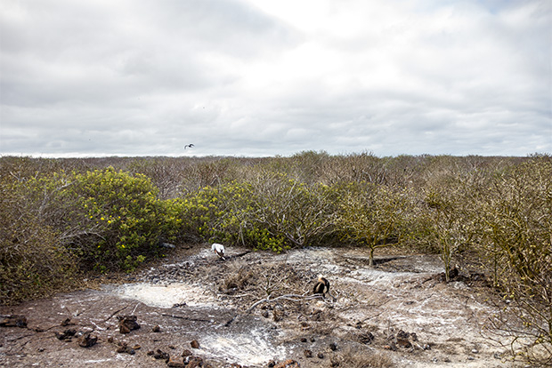 Cruises to the Galapagos Islands for 6 people October 2020