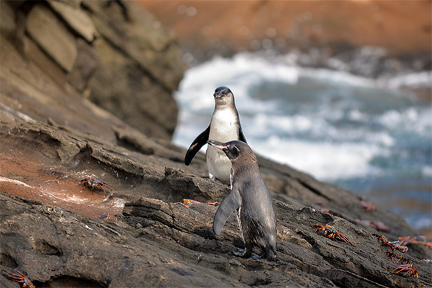 Cruises to the Galapagos Islands for 9 people December 2017