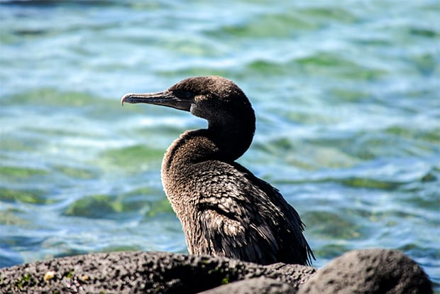 Discounts and offers Galapagos Islands 2017