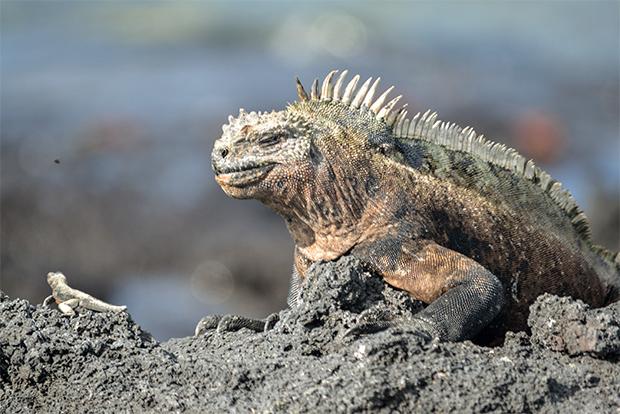 Ecuador cruises Galapagos Islands 2017