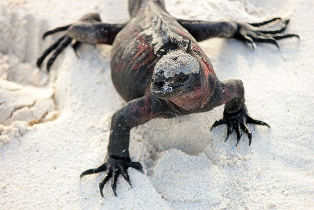 Express travel to the Galapagos Islands October 2020