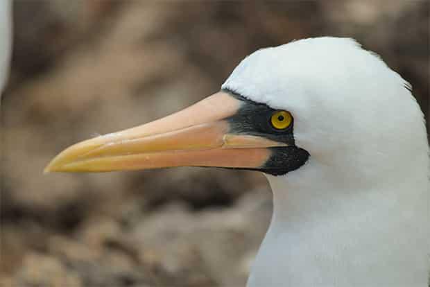 Holidays to the Galapagos Islands October 2020