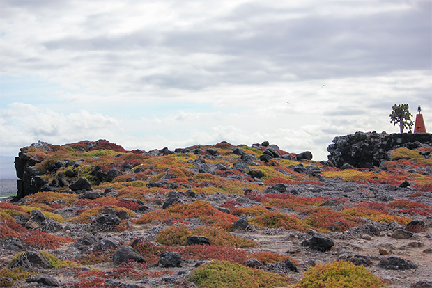 Honeymoon to the Galapagos Islands October 2020