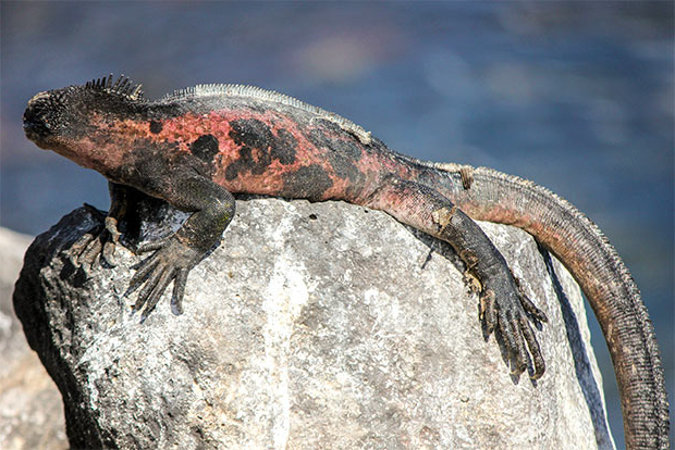 Study Tour to the Galapagos Islands December 2017