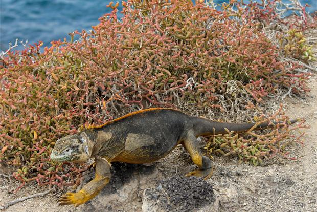 Study Tour to the Galapagos Islands October 2020