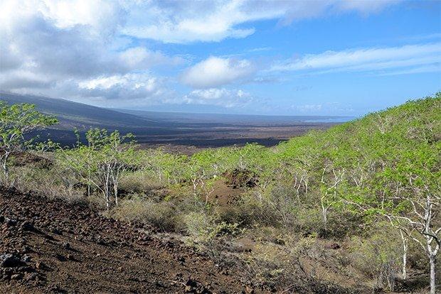 Tourism to the Galapagos Islands November 2017