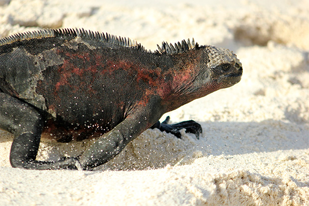 Tours and Cruises to Galapagos Islands 2017