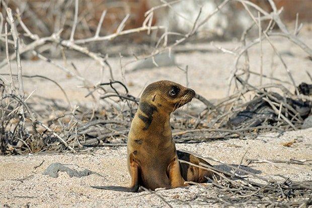 Tours to the Galapagos Islands October 2020