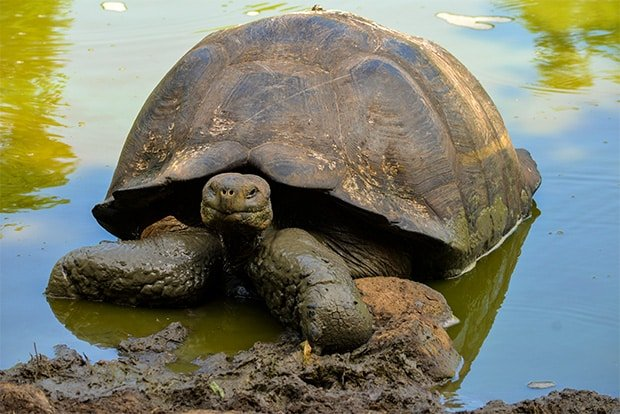 Travel to the Galapagos Islands 2017