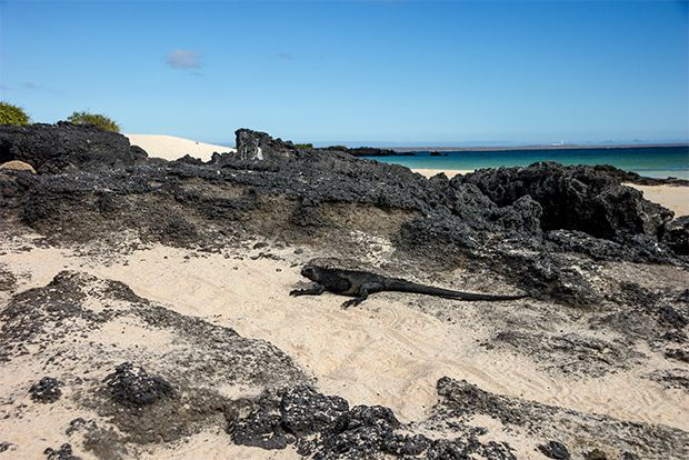 Cruise to the Galapagos Islands from Armenia