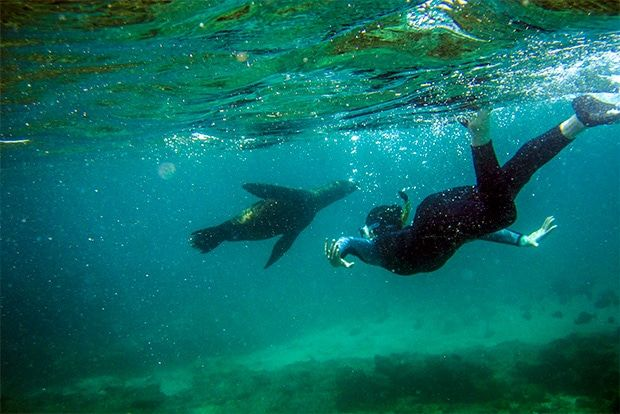 Cruise to the Galapagos Islands from Belgium