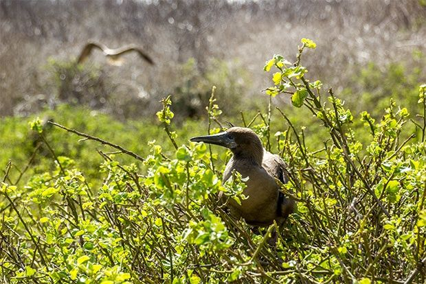 Cruise to the Galapagos Islands from Chad