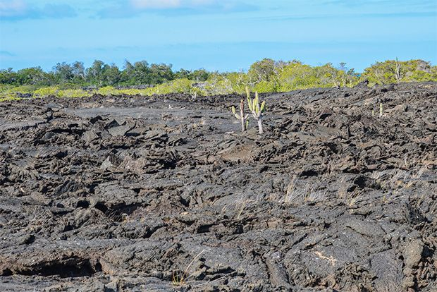 Cruise to the Galapagos Islands from East Timor