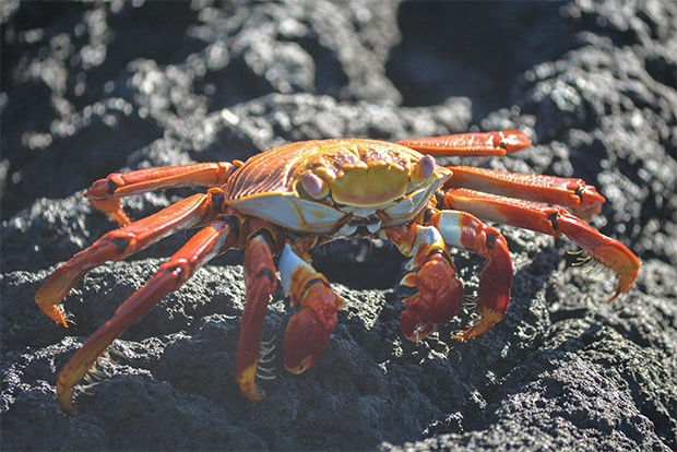 Cruise to the Galapagos Islands from Georgia