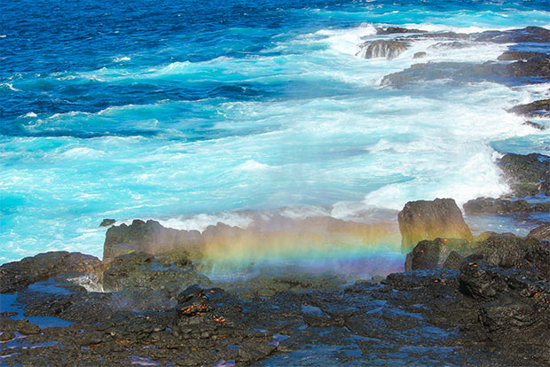 Cruise to the Galapagos Islands from Honduras