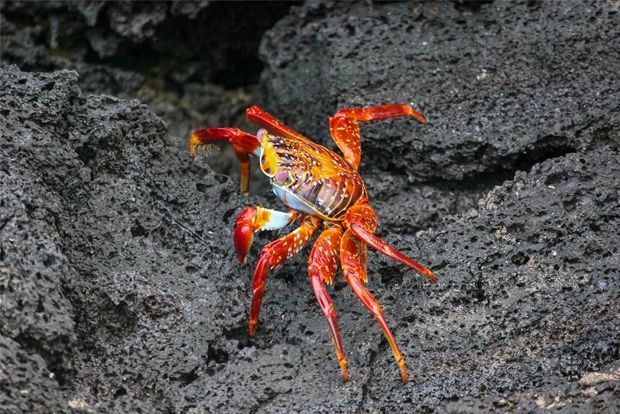 Cruise to the Galapagos Islands from Iceland