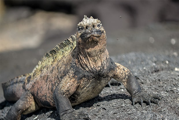 Cruise to the Galapagos Islands from Iraq