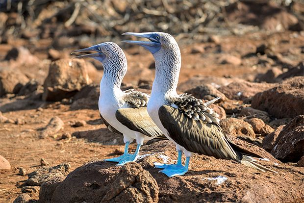 Cruise to the Galapagos Islands from Latvia