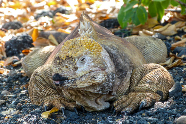 Cruise to the Galapagos Islands from Liberia