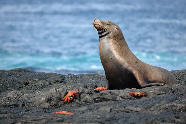Cruise to the Galapagos Islands from Mauritania