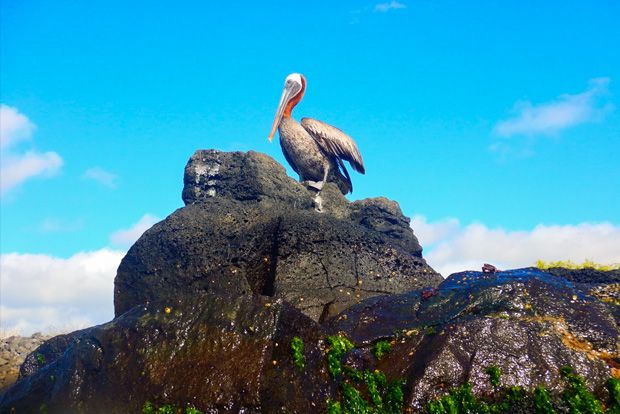 Cruise to the Galapagos Islands from Moldova