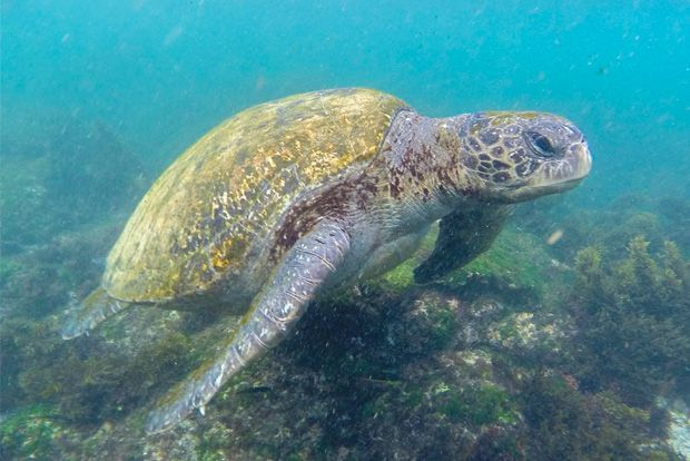 Cruise to the Galapagos Islands from Montenegro
