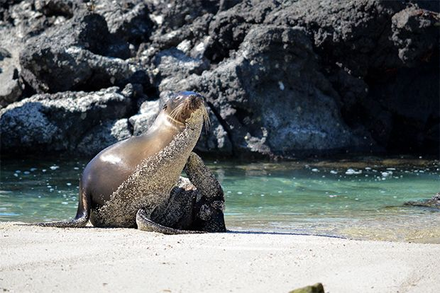 Cruise to the Galapagos Islands from New Zealand