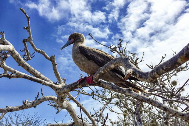 Cruise to the Galapagos Islands from Peru