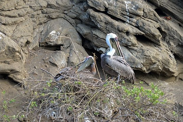 Cruise to the Galapagos Islands from Slovenia