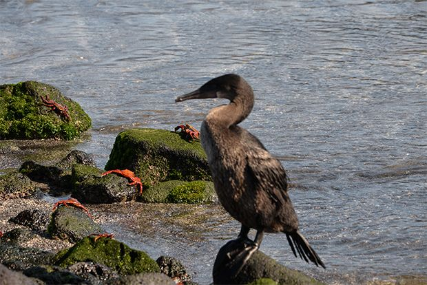 Cruise to the Galapagos Islands from Suriname