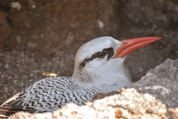 Cruise to the Galapagos Islands from Togo