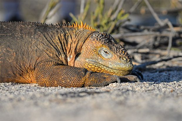 Cruise to the Galapagos Islands from Uzbekistan