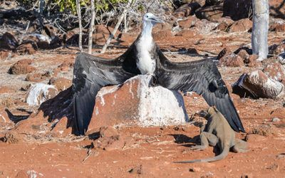 Cruises to Galapagos Islands in August