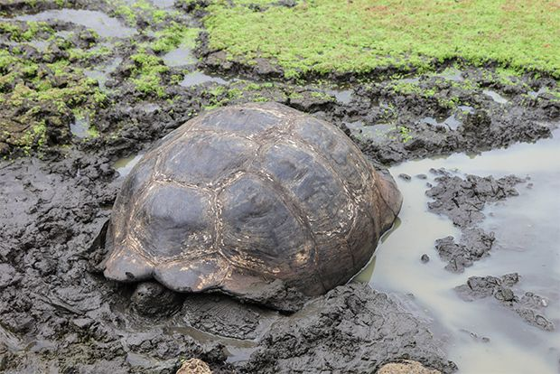 Cruises to Galapagos Islands in September