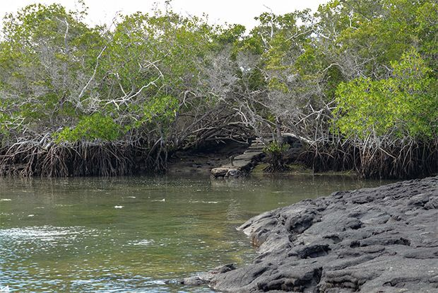 Cruises to the Galapagos Islands in January