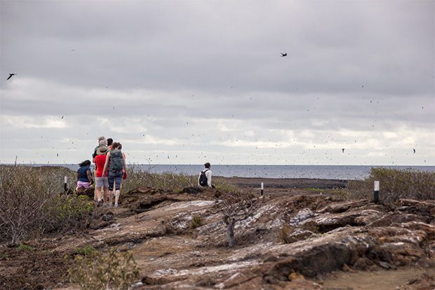 Tourism to Galapagos Islands for February 14