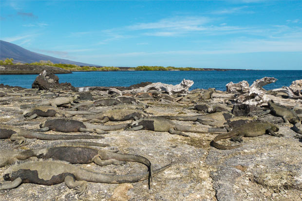 Tourism to Galapagos for Valentine