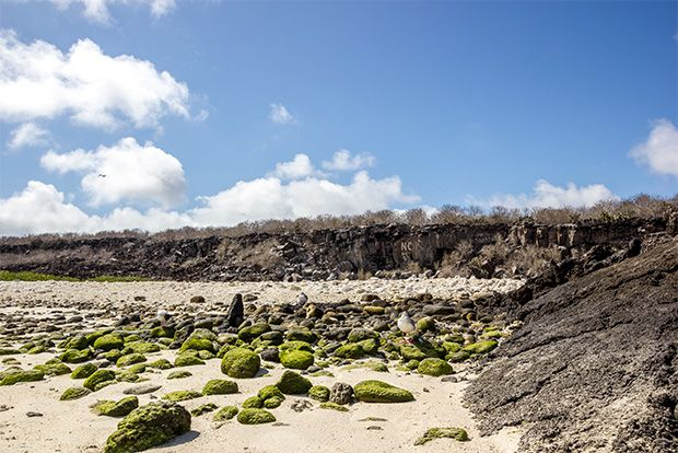 Tourism to the Galapagos Islands in New Year