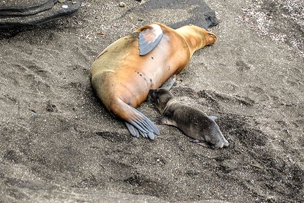 Travel in Cruise to Galapagos Islands in March