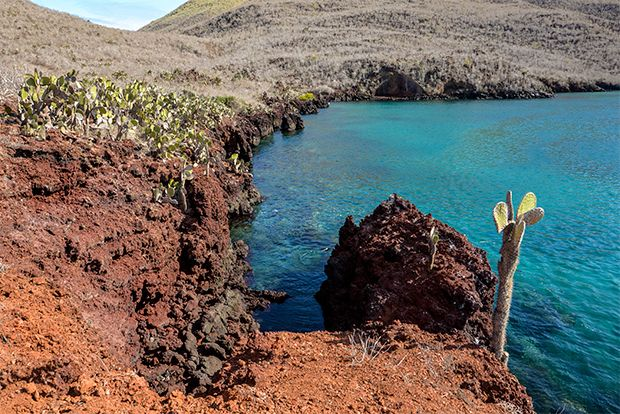Travel in Cruise to Galapagos Islands in November