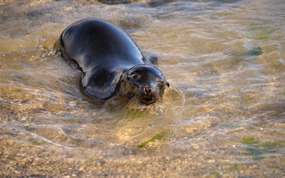 Travel on Cruise to Galapagos Islands for next month
