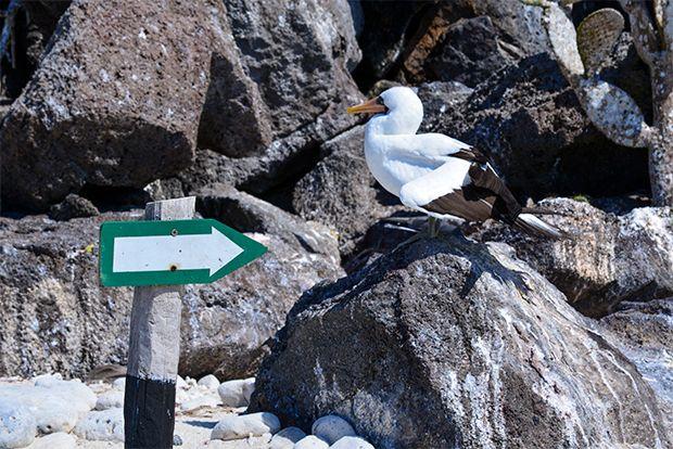 Trekking through the Galapagos Islands