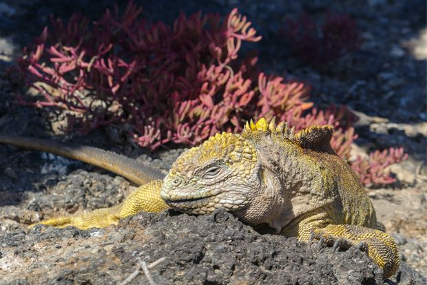 Cruises to the Galapagos Islands for 3 people February 2018
