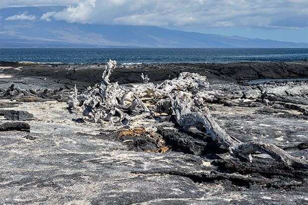 Cruises to the Galapagos Islands for 3 people January 2018