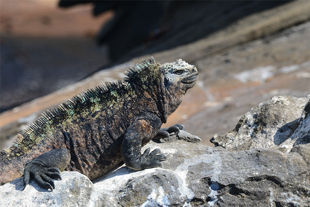 Cruises to the Galapagos Islands for 5 people February 2018