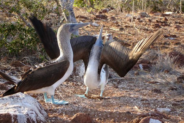 Cruises to the Galapagos Islands for 7 people February 2018